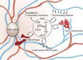Kinin-kallikrein system